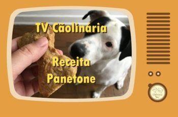 TV Cãolinária – Panetone para Cães