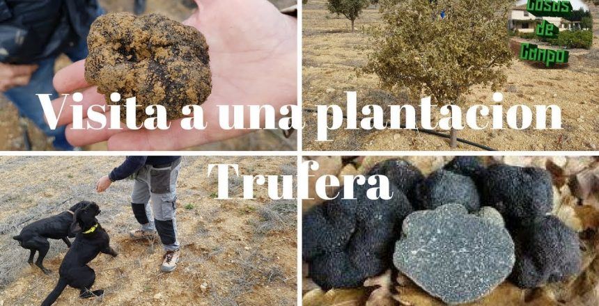 Cultivo-de-trufas-Visita-a-uma-plantacao-de-trufas.jpg
