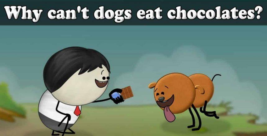Por-que-os-cães-não-podem-comer-chocolates-aumsum-crianças-educação-science-learn.jpg